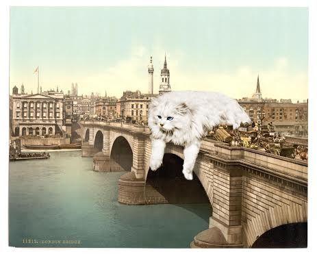London Bridge Cat-Astrophe