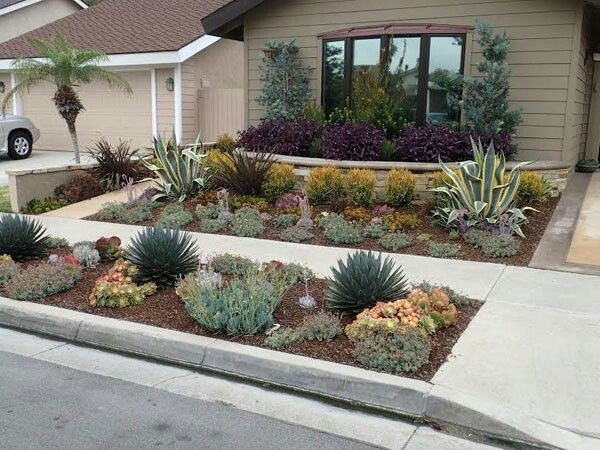 Drought Tolerant Front Yard Serragardens Succulents Replace Lawn Agave Americana
