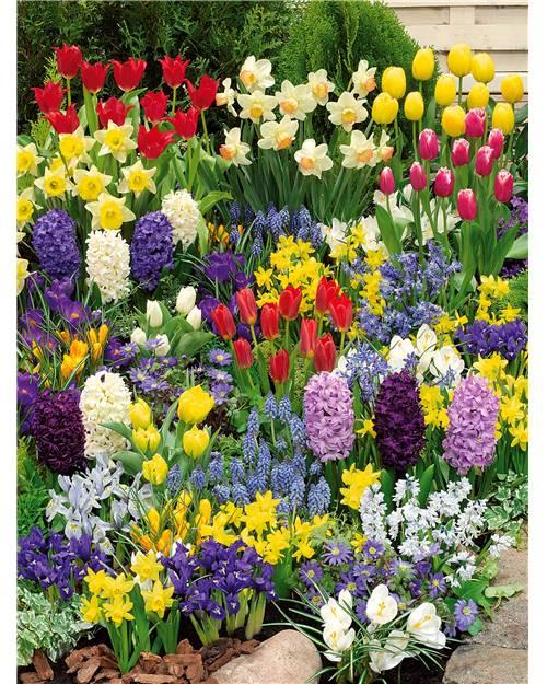 Massif de 200 bulbes à floraisons printanières Bulbes de