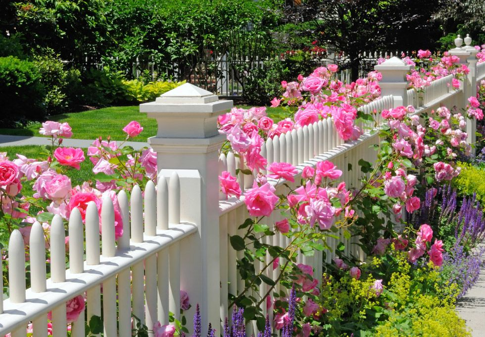 romantischer vorgarten mit rosen und lavendel | zukünftige, Garten ideen