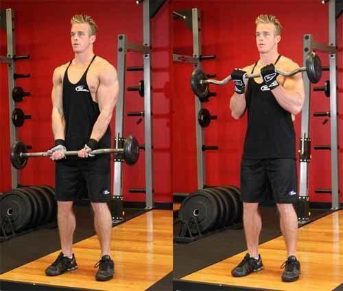 O músculo dos bíceps é até um hoje um dos mais requisitados nas academias, seja pela cultura de ter-se um grande braço, pelo ego masculino de associar gran