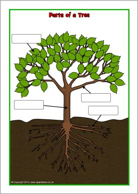 Parts Of A Tree Poster Worksheet Sb10351 Sparklebox
