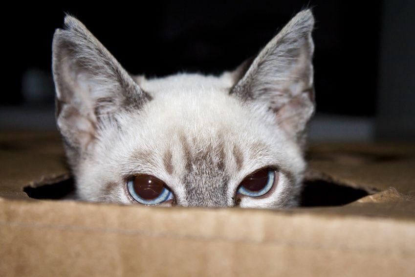 Wurmkur Bei Katzen 13 Fragen Und Antworten Rund Um Die