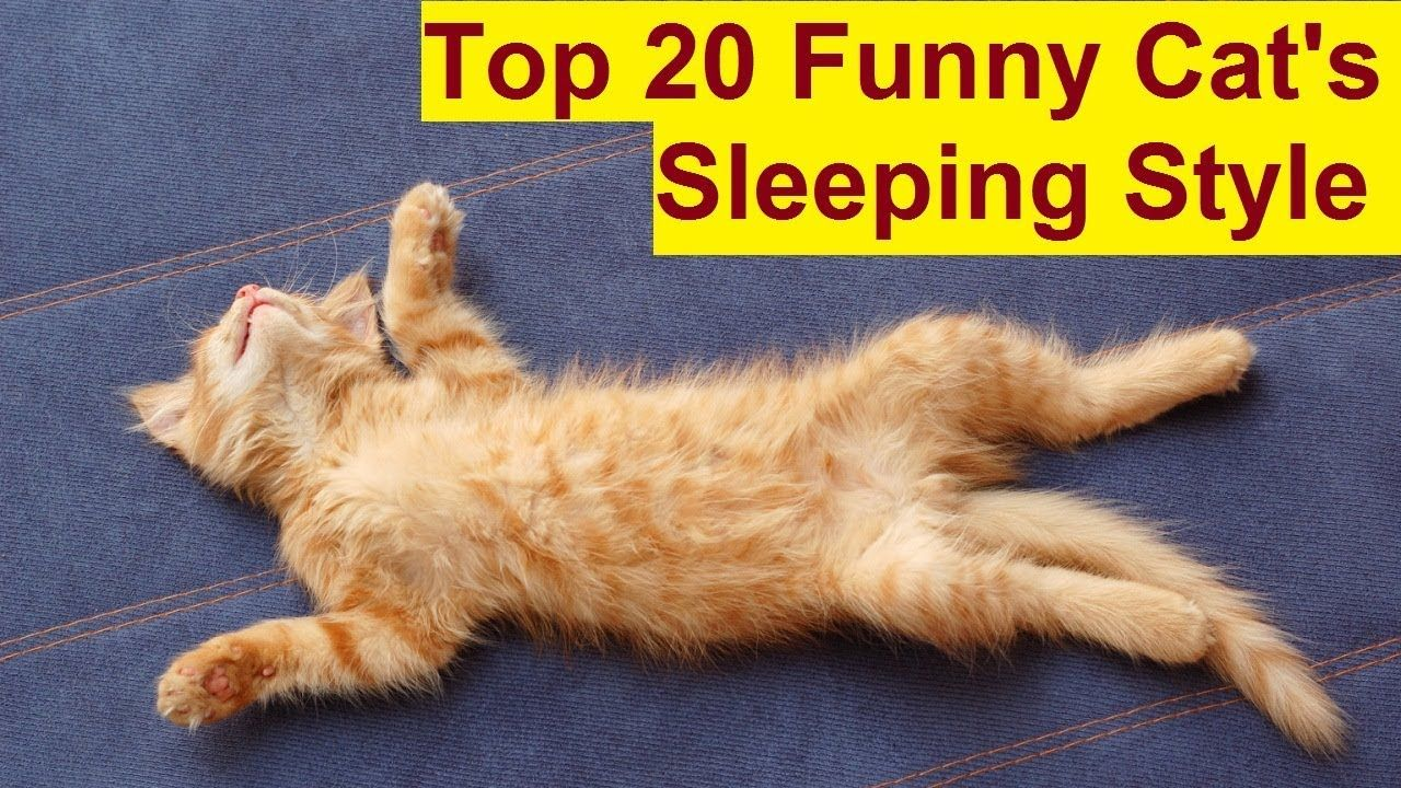 Top 20 Funny Cats Sleeping Style Part 2 Cats Sleeping In