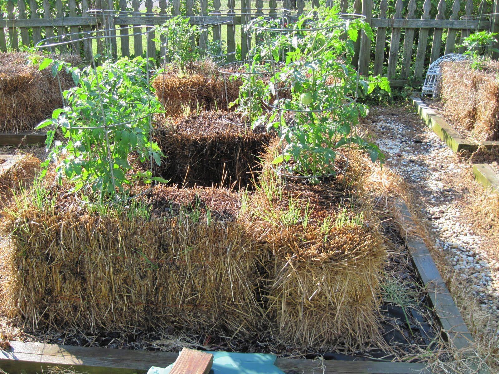 Central Virginia Organic Gardener Straw Bale Gardening 400 x 300
