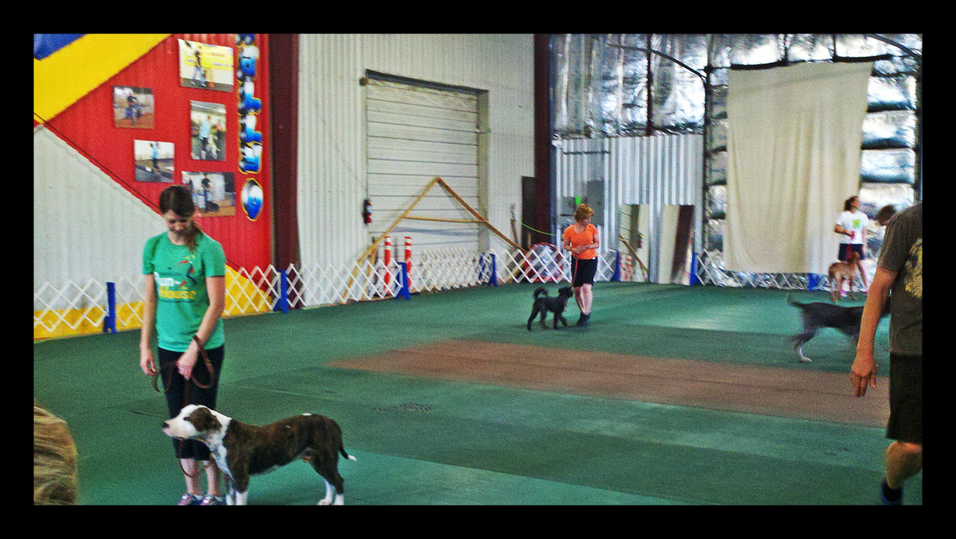 Dog Training Group Classes At Club Canine Houston