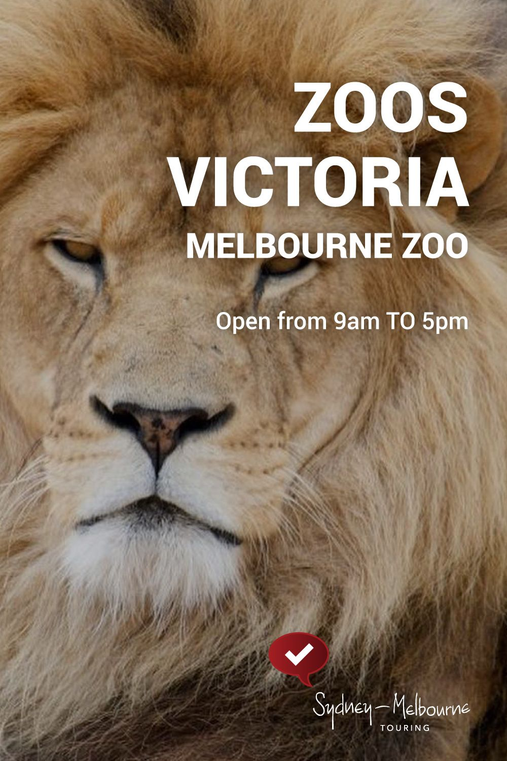 What You Looking At Visit The Big Cats At The Zoo Melbourne