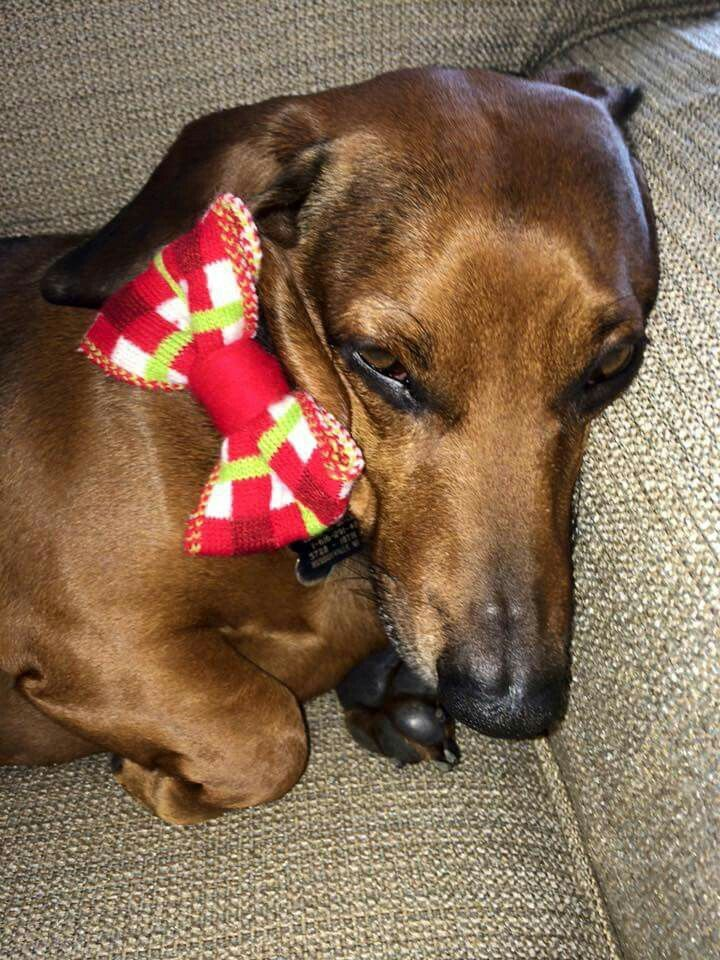 Pin by DOOBER SUPPLY on DOXIES Dogs, Animals