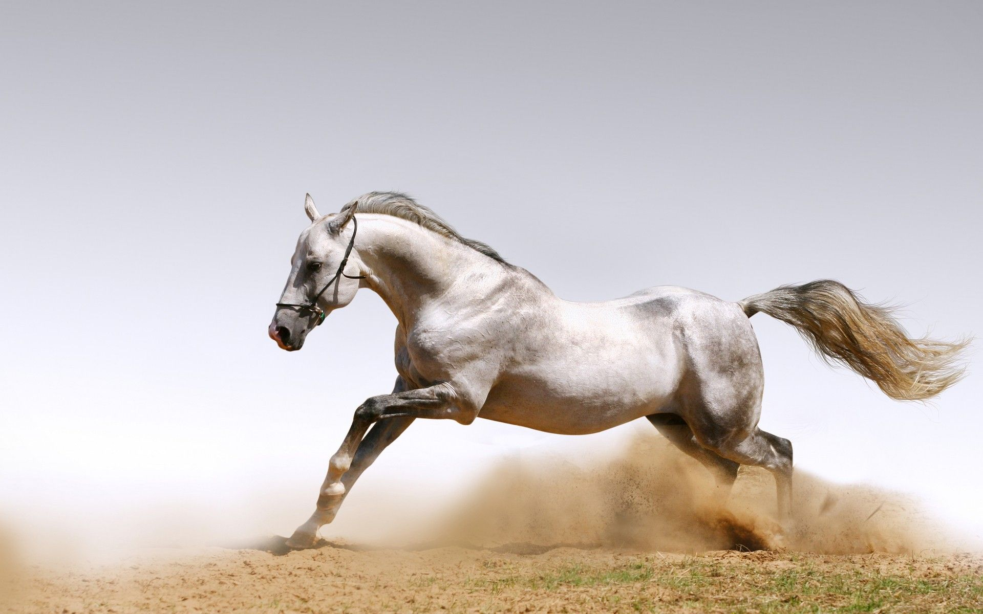 horse wallpaper desktop bdf