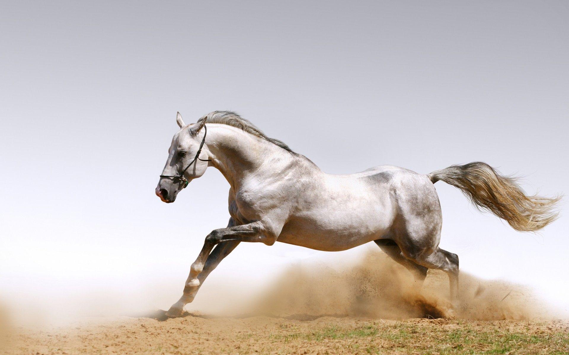 Beautiful Wallpaper Horse Desktop Background - 515d8a65ff99ac9d6cacff739457ed46  You Should Have_485685.jpg