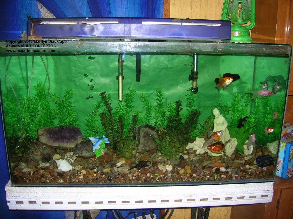 Peces tropicales de agua dulce fotos de los 17 acuarios for Peces tropicales acuario