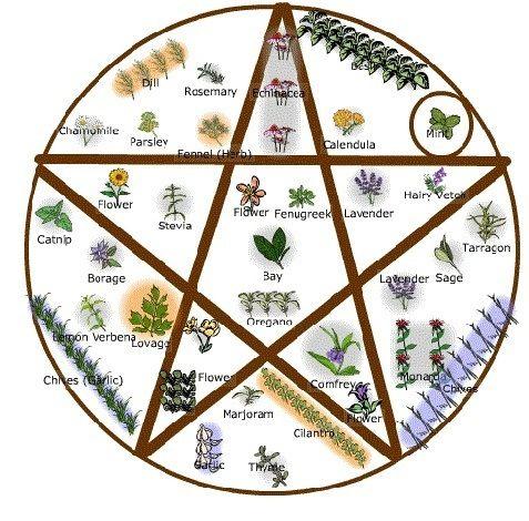 Herb Garden Picture | Mind and Spirit | Witchy garden, Witch herbs