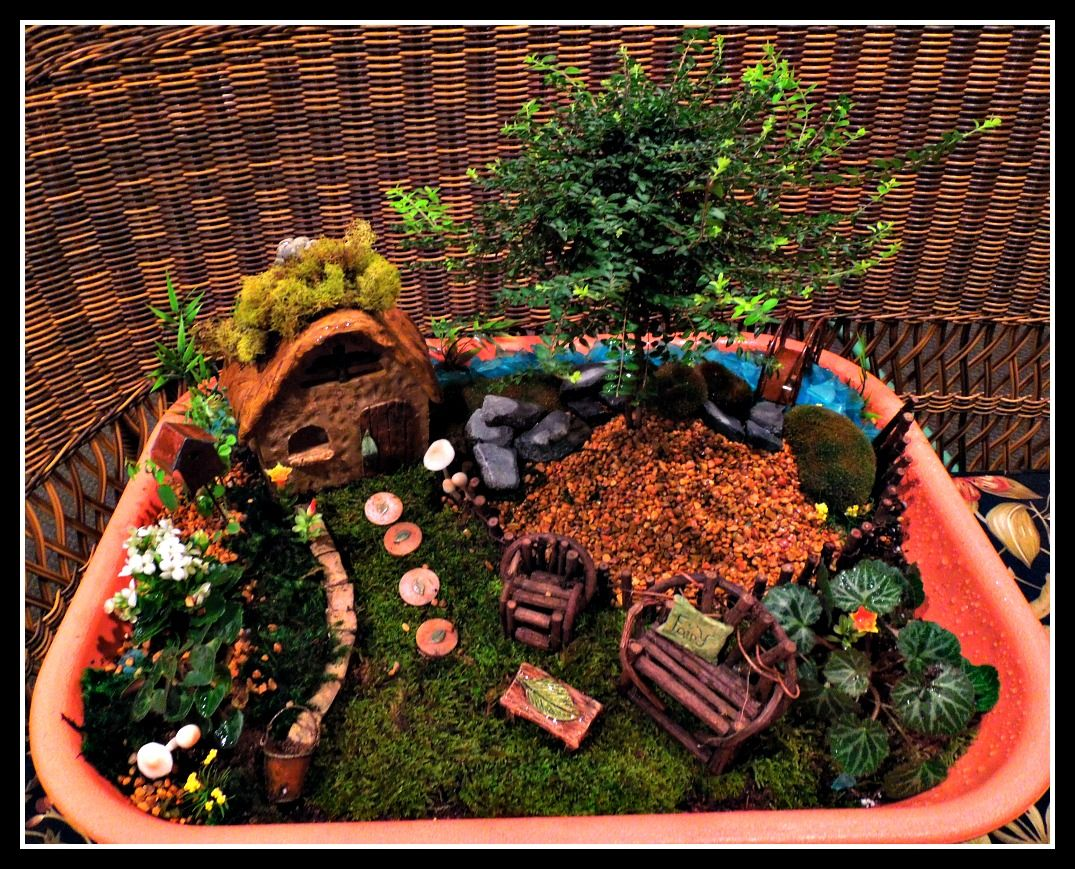 Great Mix Of Dwarf Conifers And Fairy Garden Accessories Fairy Garden Gnomes Fairy Garden Fairy Garden Accessories
