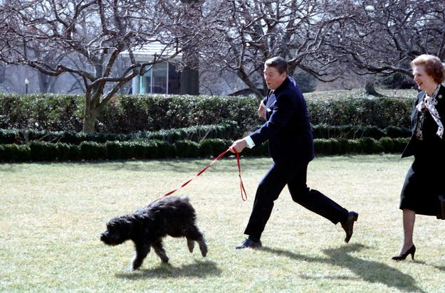 The 42 Best Photos Ever Taken Of White House Pets Famous Dogs