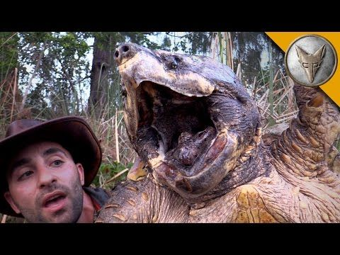 6f62d95e0 The BIGGEST Turtle You've EVER seen! - YouTube | STRANGE AND SCARY ...