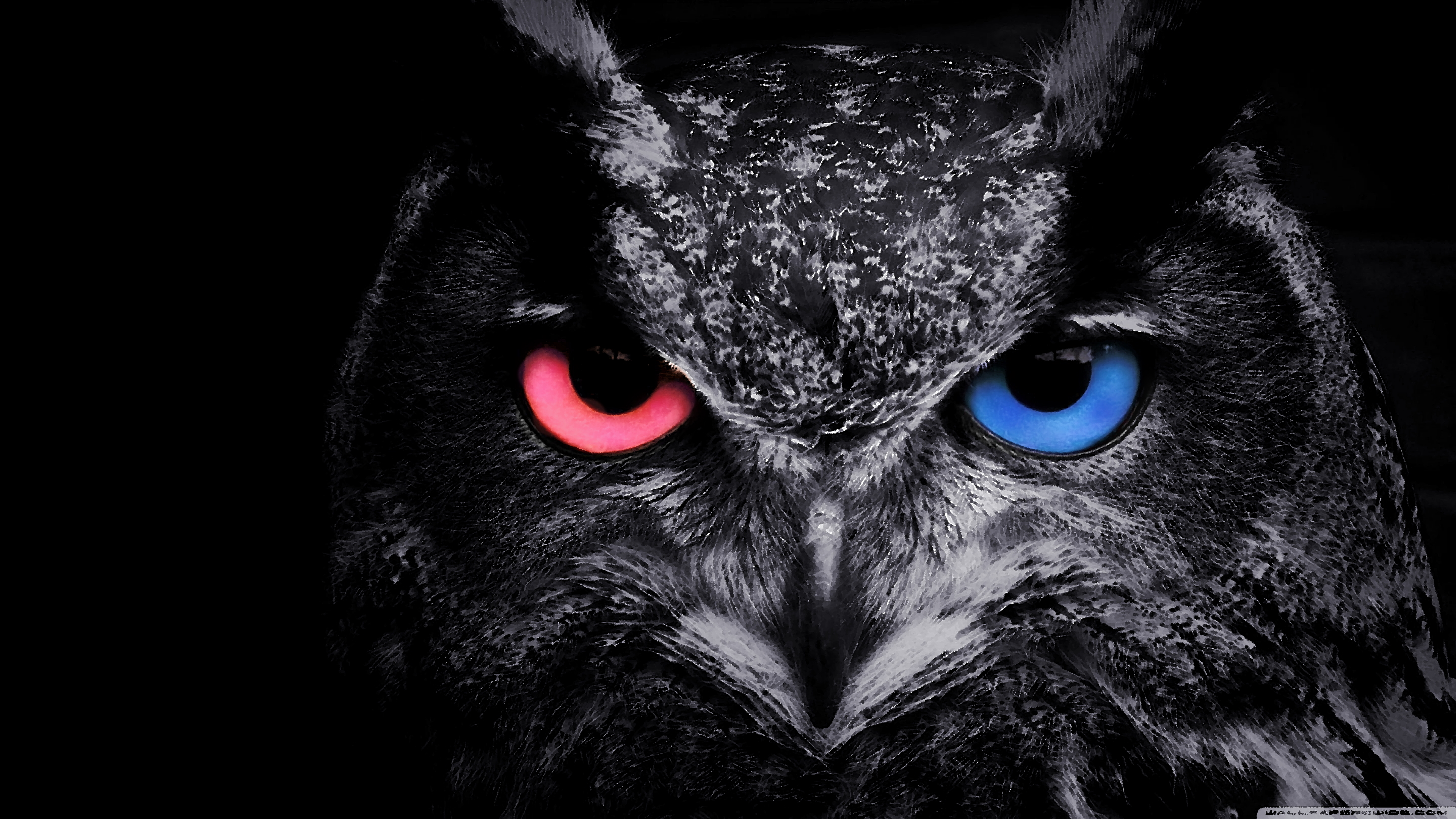Pin By Bogdan Teodoru On Desktop Wallpapers Owl Wallpaper Owl Background Owl