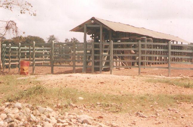 Corral con techo corral redondo manga de corral con techo for Techos redondos fotos