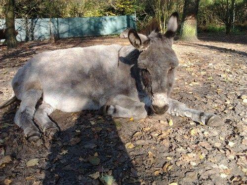 Gijs op de ezelsociteit