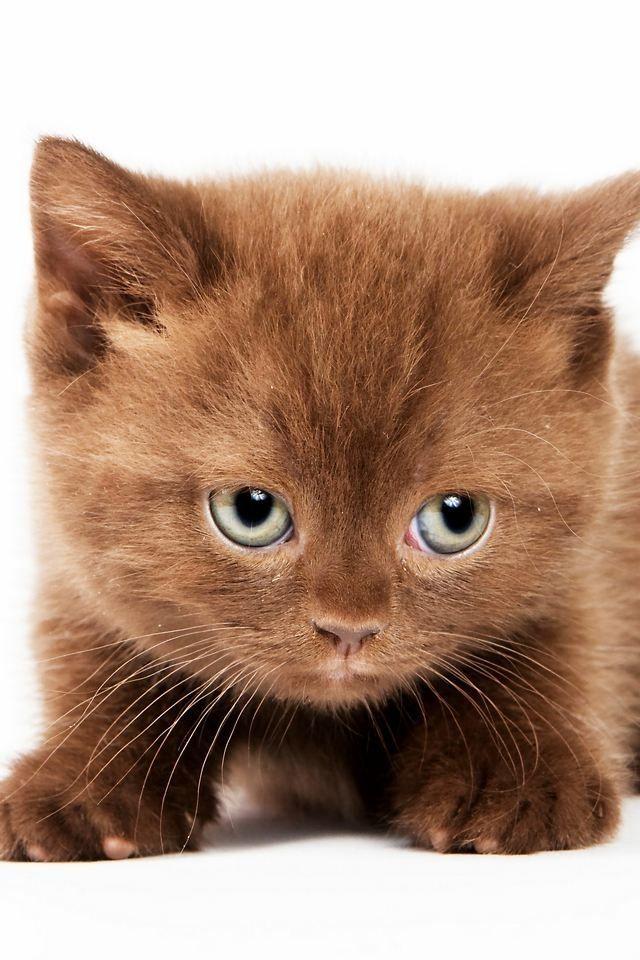 Süsses Katzenbaby Katzenbabys, Süße katzenbabys und Katzen