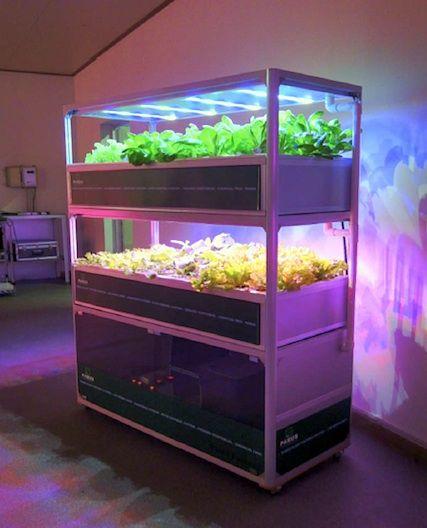 The Led Mini Garden System Aquaponics System Backyard 400 x 300