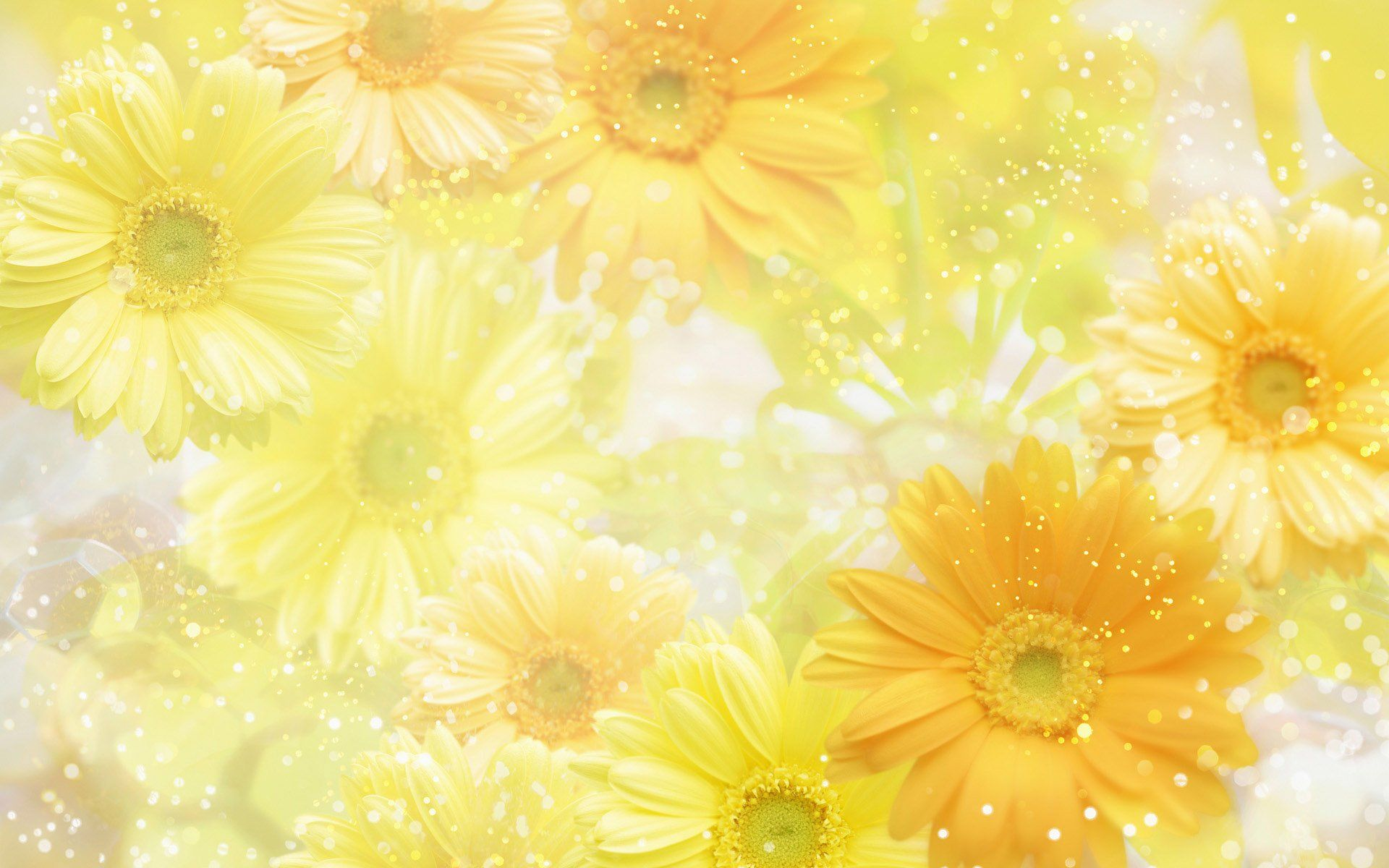 image detail for wallpaper background yellow nature 274868
