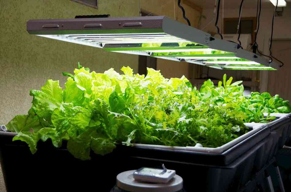 Learn To Create Your Own Grow Lights To Keep Your Indoor 640 x 480