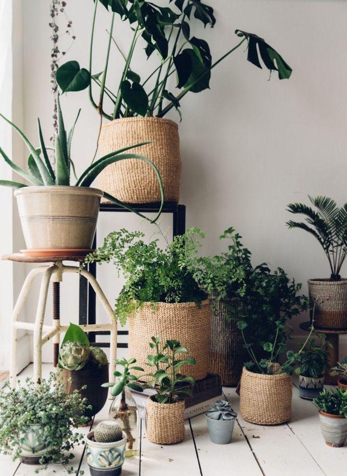 Piante Da Appartamento Intrecciate.Pin Di Alice Gazzola Su Giardini Decorazioni Vegetali Pianta