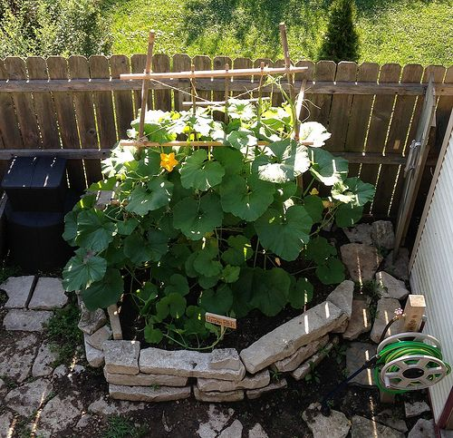 35 Advantageous Small Vegetable Garden Ideas For Your: We Planted A Vertical Pumpkin Patch In Our Tiny Urban