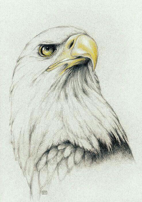 Epingle Par Talita Mendes Sur Desenhos Dessin Aigle Paysage