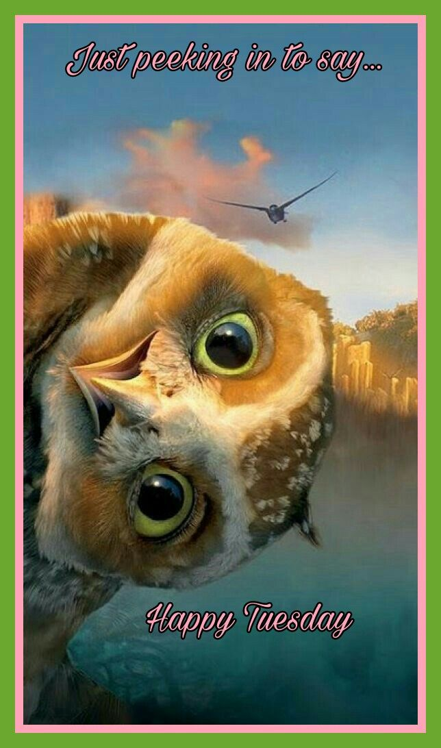 Happy Tuesday Animals, Animals beautiful, Owl pictures