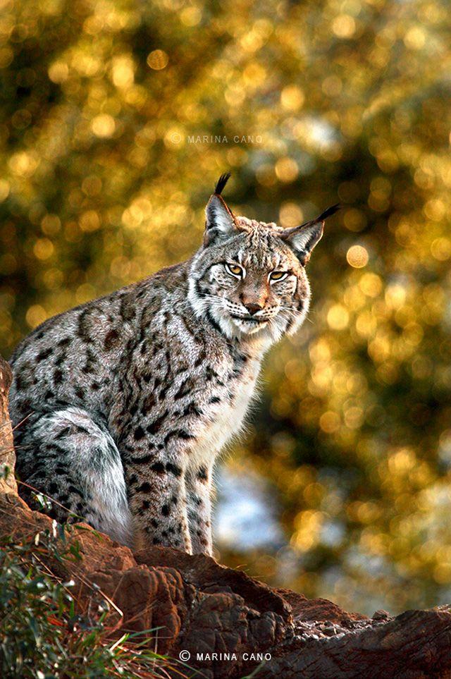 Wildlife Photography By Marina Cano