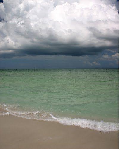 Caladesi Island Florida: Wildlife - Caladesi Island, FL - Google Maps