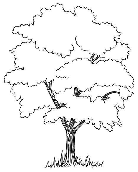 Wenn Du Mal Buch Baum Zeichnung Malvorlagen Fur Kinder