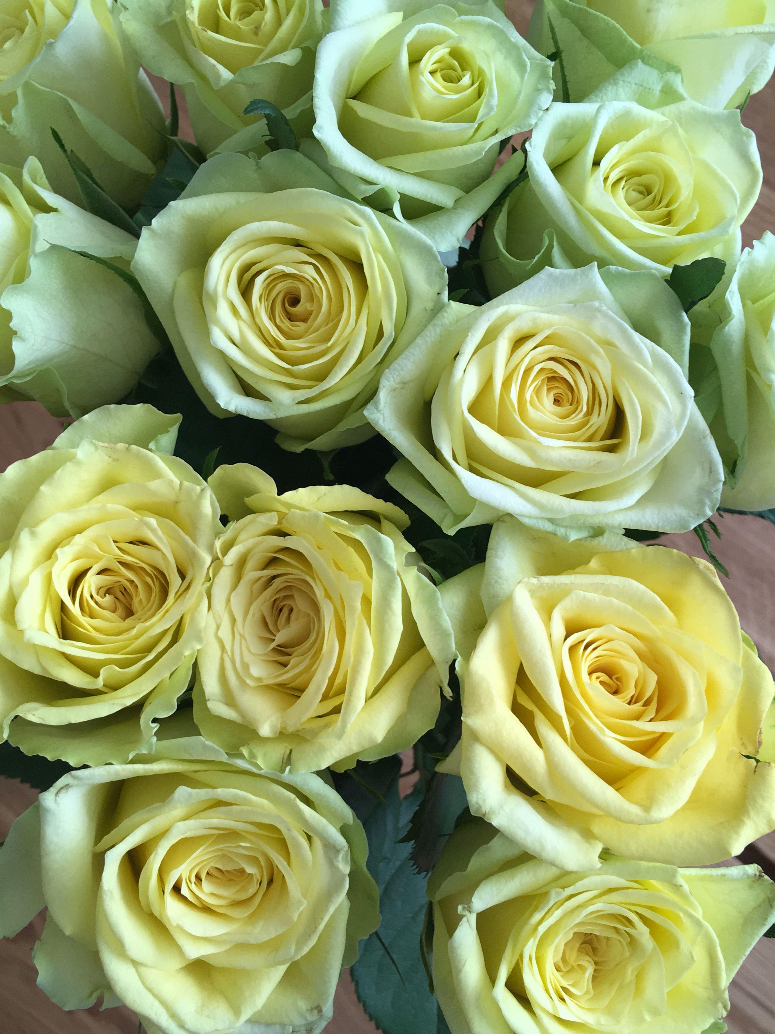 roser odense