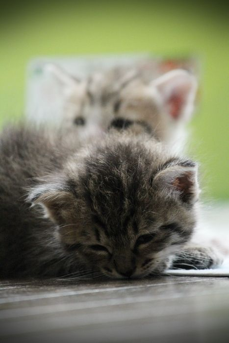 Yue-nanami: 2014.08.05 meine Katzen