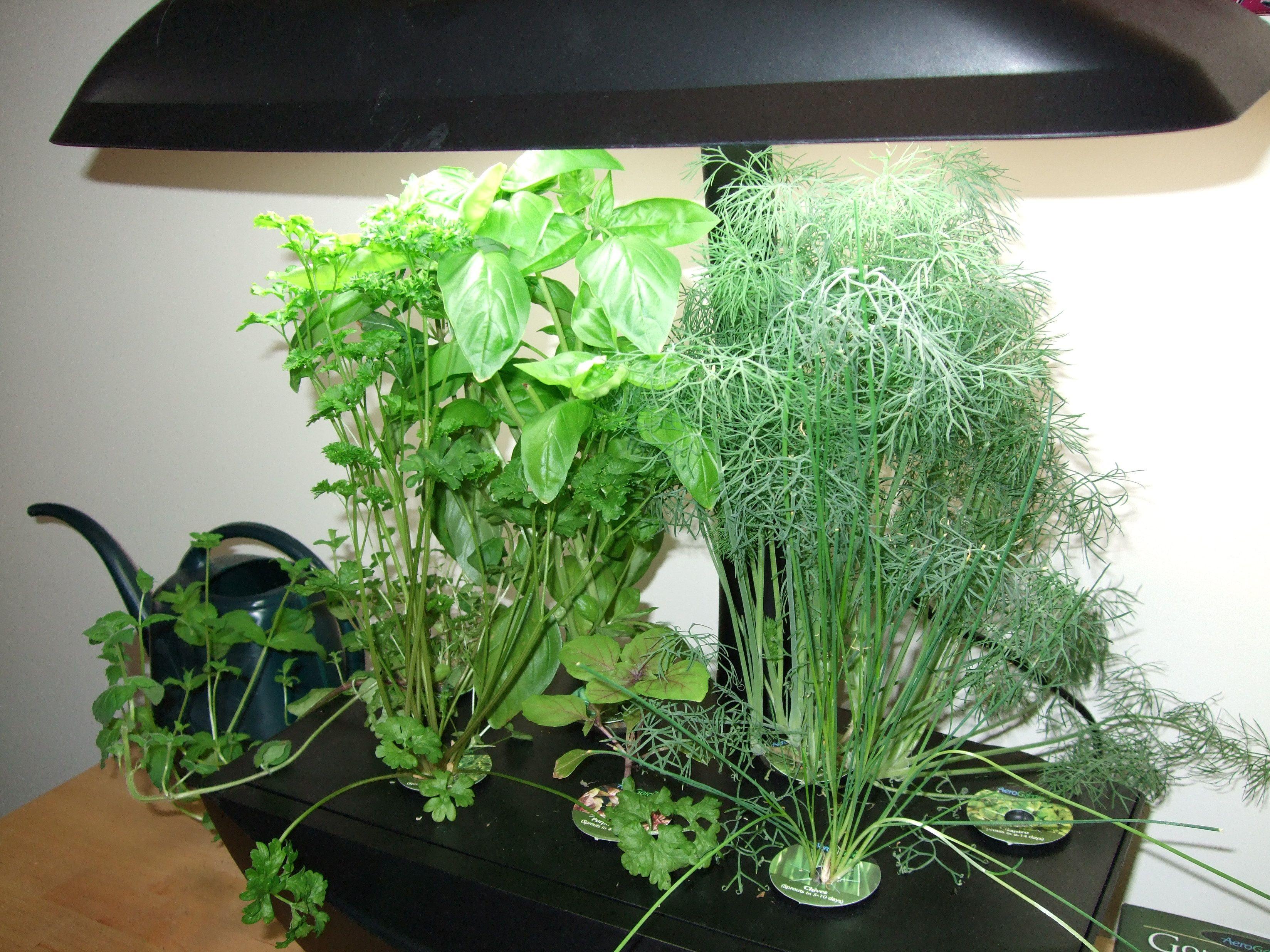 Aero Garden Growing Tips Hydroponic Gardening Indoor 400 x 300