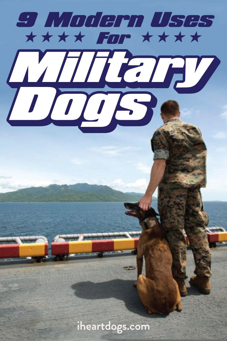 9 Modern Uses For Military Dogs Military Dogs Dogs Service Cat