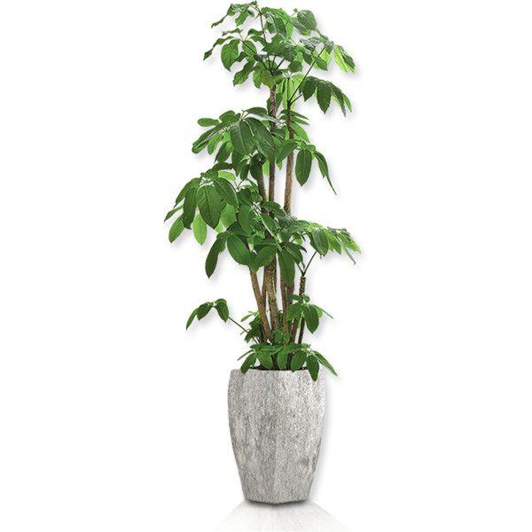 Png Transparent Artificial Plants Pesquisa Google Plants