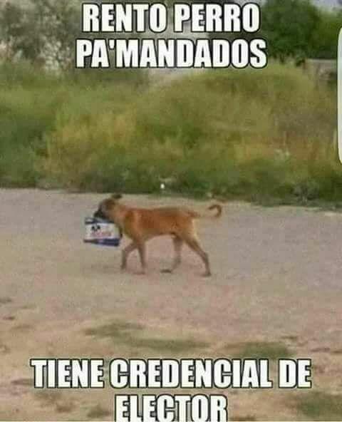Pin De Renato Chava En Borrachos Perros Borrachos Funny