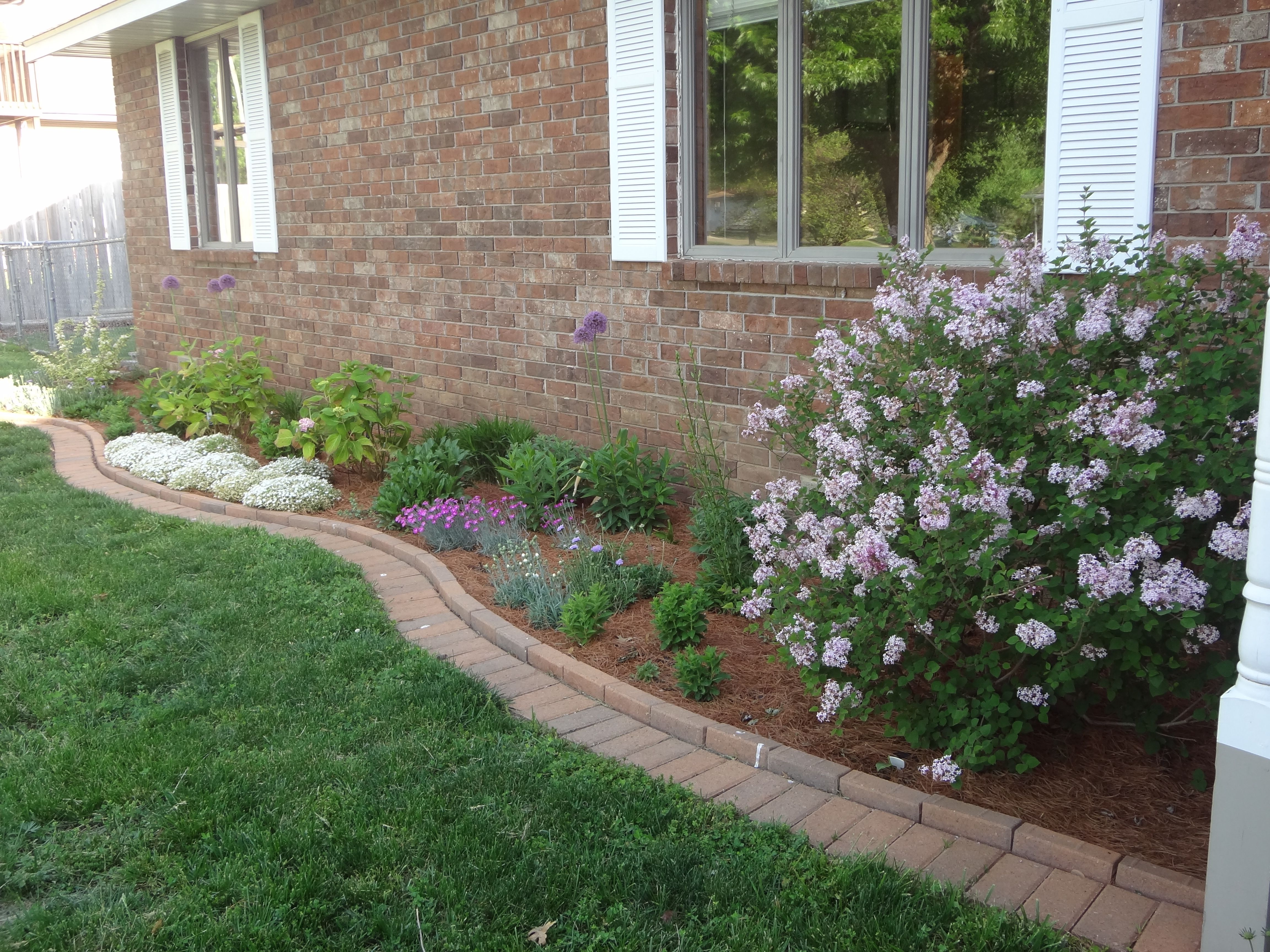 Foundation border with josee reblooming lilac in the for Garden scaping