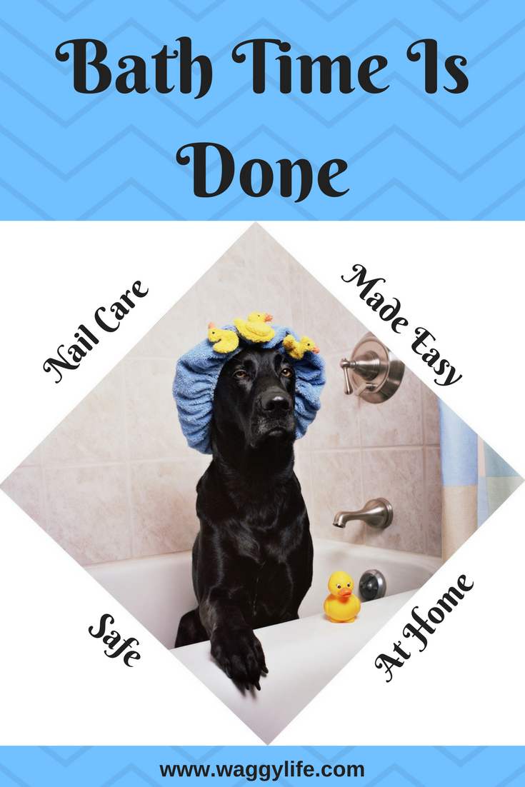 All The Essentials To Help Keep Your Dog Looking Its Best Stainless Steel Professional Grade Tools Easy Use Safe For Puppy Safe Puppy Grooming Diy Dog Stuff