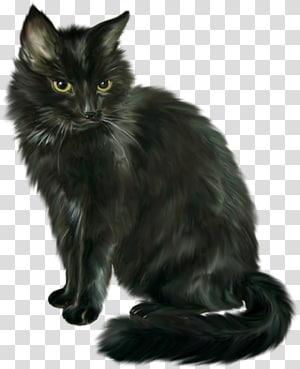 Long Furred Black Cat Illustration Cat Black Cat Halloween Horror Transparent Background Png Clipart Black Cat Illustration Grey Tabby Cats Cat Background