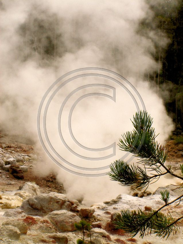 Yellowstone National Park View - Wyoming - This and thousands of other high quality royalty-free digital photos are available for download from Refocus Photography - www.refocusphotography.com! #stockphotography #photo #photography