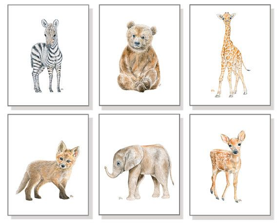 Baby Animal Nursery Art Prints By Jamesriverstudios
