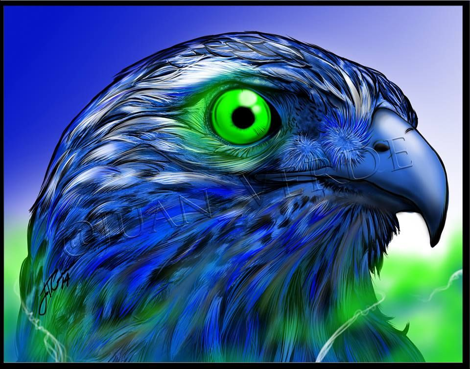 This seahawk is a predator of saints Seattle seahawks