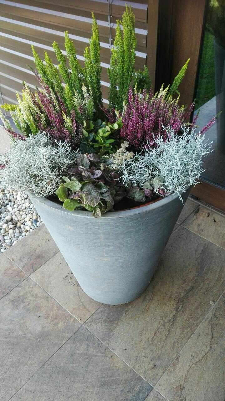 Cveti - My Blog #wintergardening