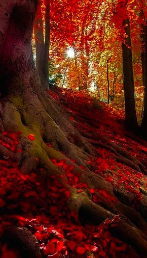 Autumn Light by Hannes Cmarits