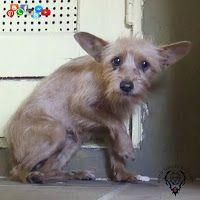 Valle de Chalco Pit Bull Terrier: Señales que las lesiones de una mascota son debido al abuso y no a un accidente  #VCPBT #Artículos