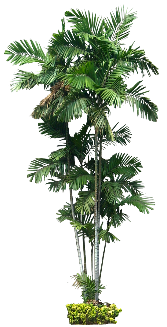 A Collection Of Tropical And Subtropical Plant Images With Transparent Background Tree Photoshop Tree Psd Photoshop Nature