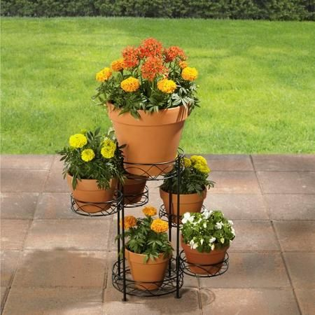 516c91a476c959266be61f2acbdeb1cc - Better Homes And Gardens Plants For Sale